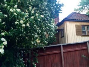 Sommar på Södermalm 2015